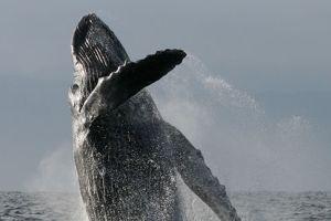 Expedición en Busca de Ballenas