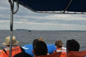 Cola de ballena a la distancia